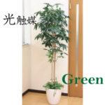 光触媒インテリアグリーン/1.8m~